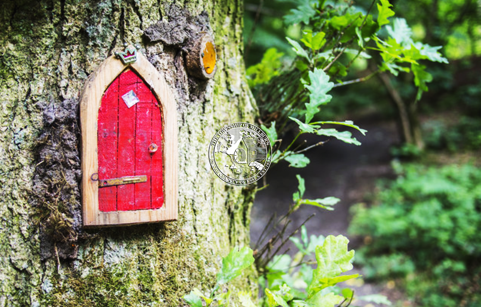 Image of tiny red door in tree - fairy home