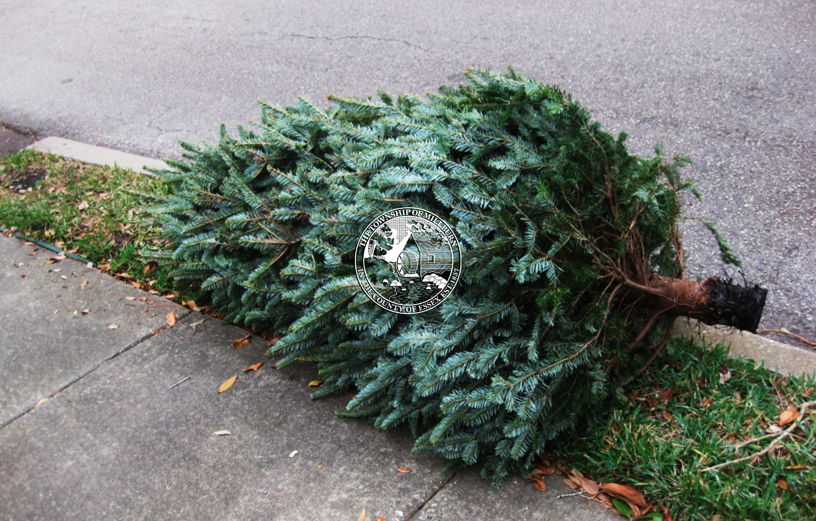 Curbside Tree Collection